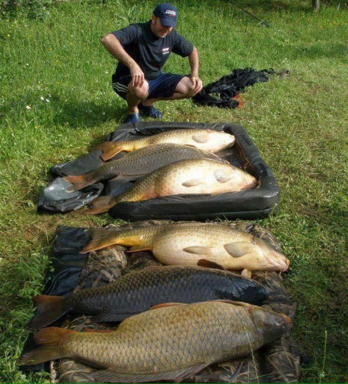 cá chép và đặc tính