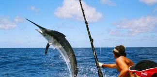 câu cá biển