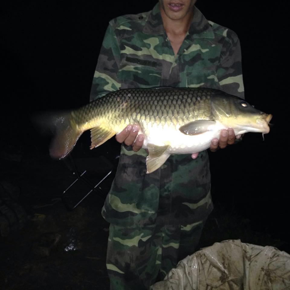 câu cá chép đêm