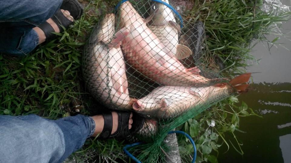 đặc tính đi ăn của cá chép