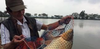câu cá chép cần mồi gì