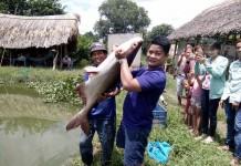 cá tra khủng (2)