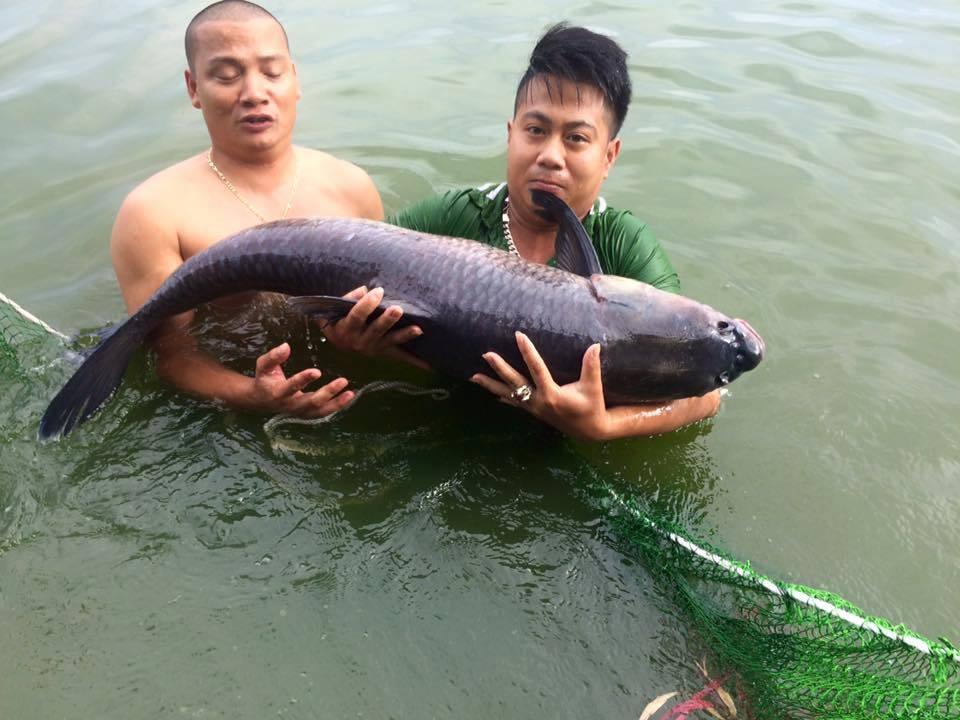 cách làm mồi câu cá trắm đen (1)