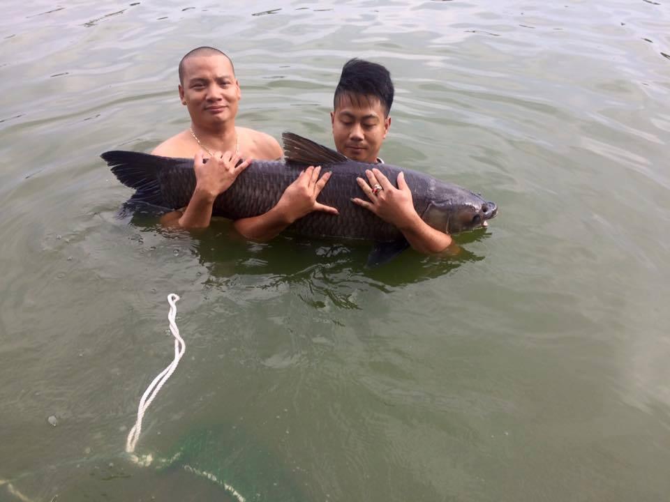 cách làm mồi câu cá trắm đen (2)