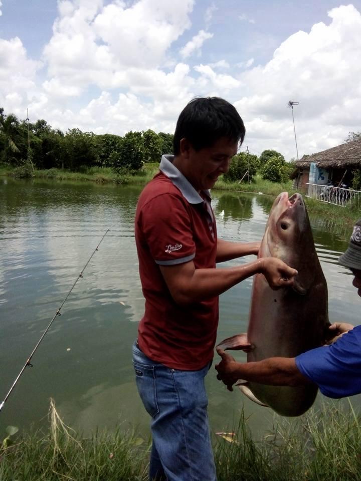 cách làm mồi câu cá tra