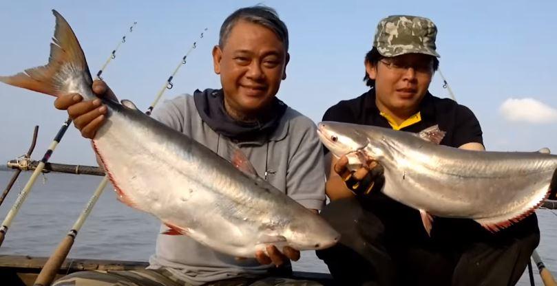 cách làm mồi câu cá bông lau
