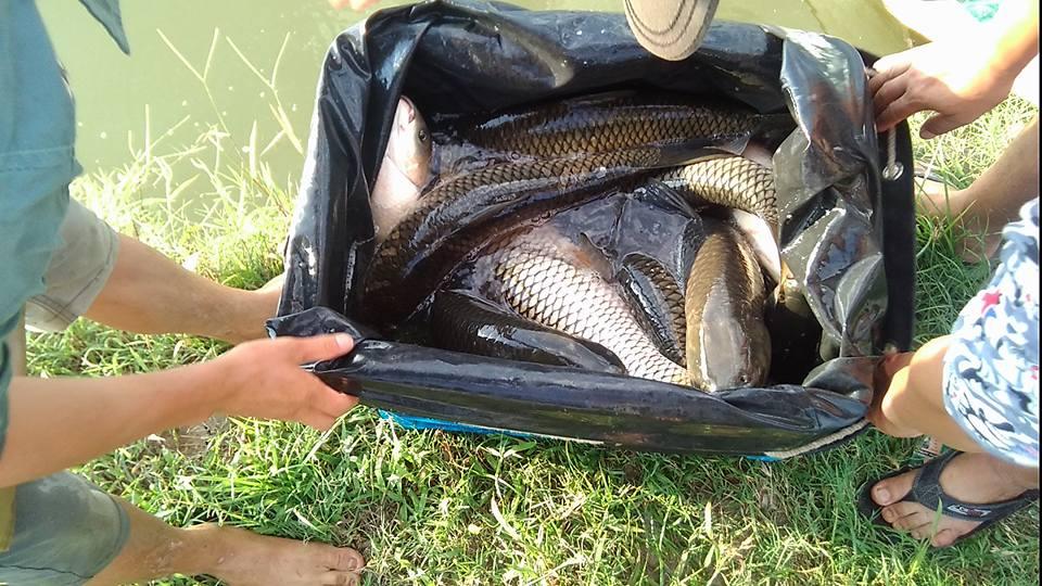 lịch thả cá các hồ câu hà nội