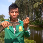 câu cá lóc